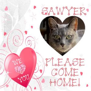 Come home Sawyer