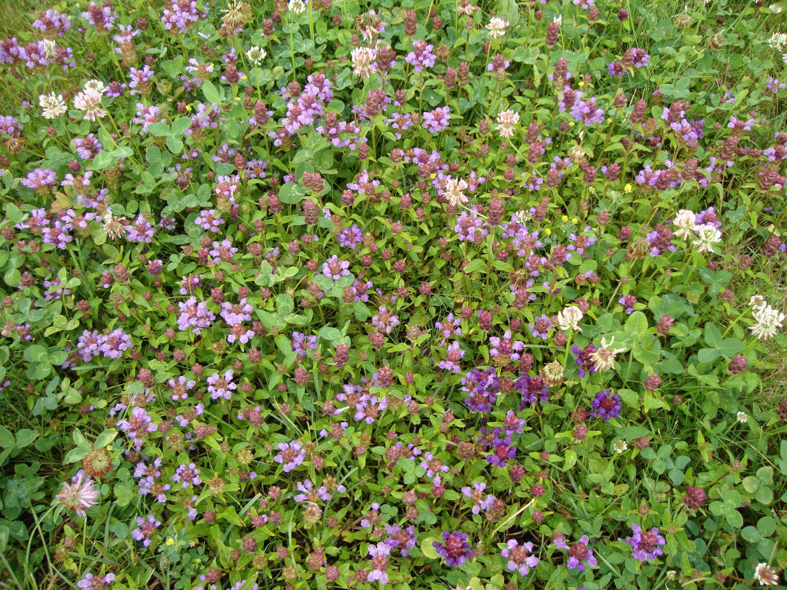 Un piccolo giardino in città: Un campo di fiori in giardino