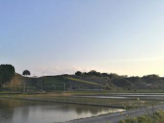 茶畑と田んぼ