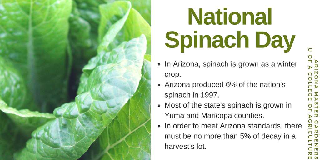 National Spinach Day Wishes