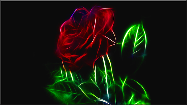 wallpaper hd mawar hitam
