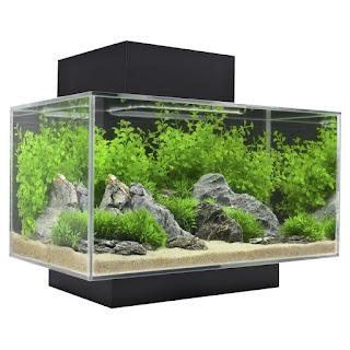 Tempat Atau Aquarium Ikan Hias