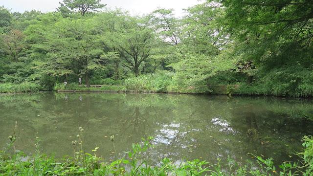 Institute of Nature Study Tokyo