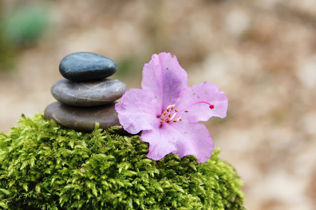 life-pebble-rock-flower-pic