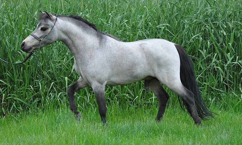 Top 10 Most Popular Horse Breeds In The World Just On Top