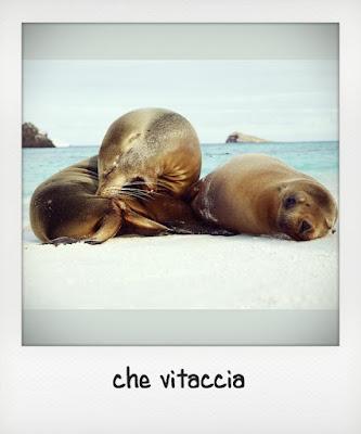 Due cuccioli di leone marino delle Galapagos in spiaggia