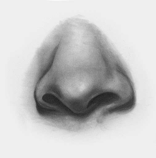 nose draw drawing step noses easy anime sketch facial features beginners beginner guide line artists artistsnetwork techniques learning some articulo