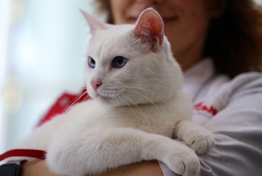 Archilles, Kucing Yang Akan Meramal Pemenang Piala Dunia 2018