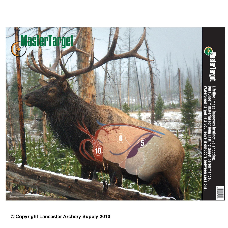 3d View Picture: 3d Elk Archery Target