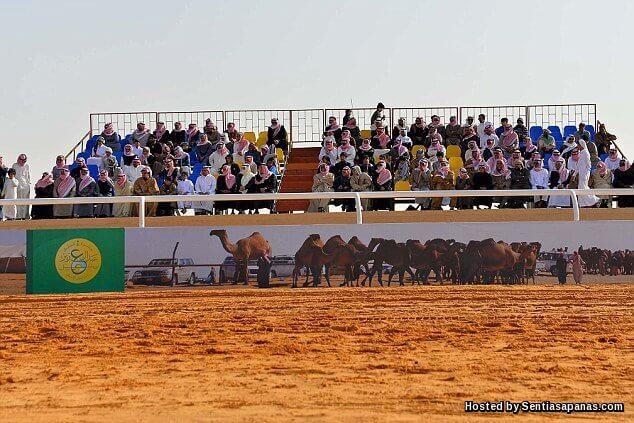 Festival Unta Raja Abdulaziz