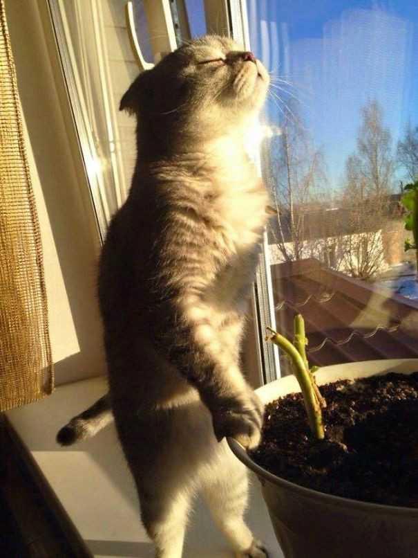 Γάτες που απολαμβάνουν τον ήλιο! (Φώτο)