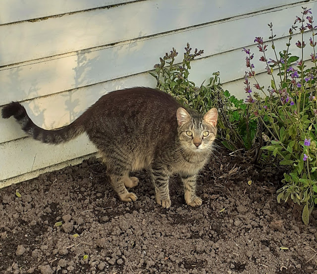 Otto in the vegetable patch