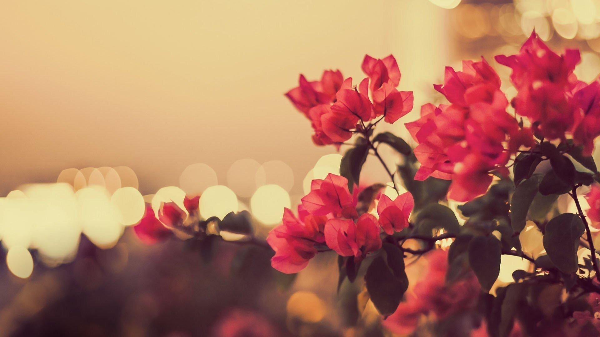 Papel De Parede Flores Vintage Retro
