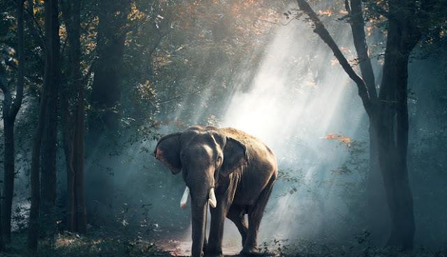 Meski Menjijikkan, InilaH 5 Kopi Nikmat Bernilai Mahal Dari Kotoran Hewan