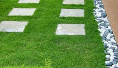 rumput taman