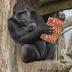Πώς τα ζώα γιόρτασαν τα Χριστούγεννα (μέρος β')