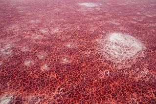 Deadly lake in Tanzania