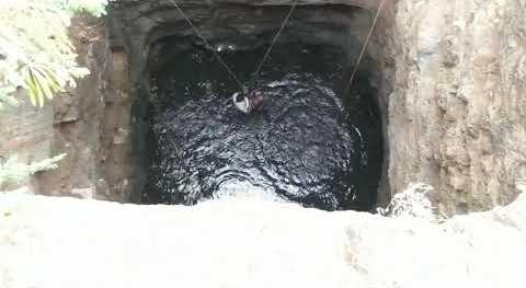डूबते हुए मोर को बचाने के लिए कुएं के अंदर चला गया शख्स, अंदर बैठे थे जहरीला सांप, देखे वीडियो