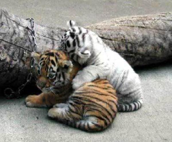 """Ngàn lẻ một khoảnh khắc siêu dễ thương của các """"bé bi"""" động vật"""