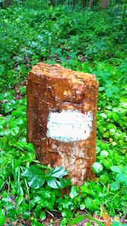ghughwa fossils  park dindori, ghughva jivasm udhyan park dindori mp