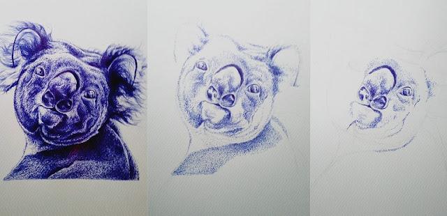 Aureliano Maldonado - koala