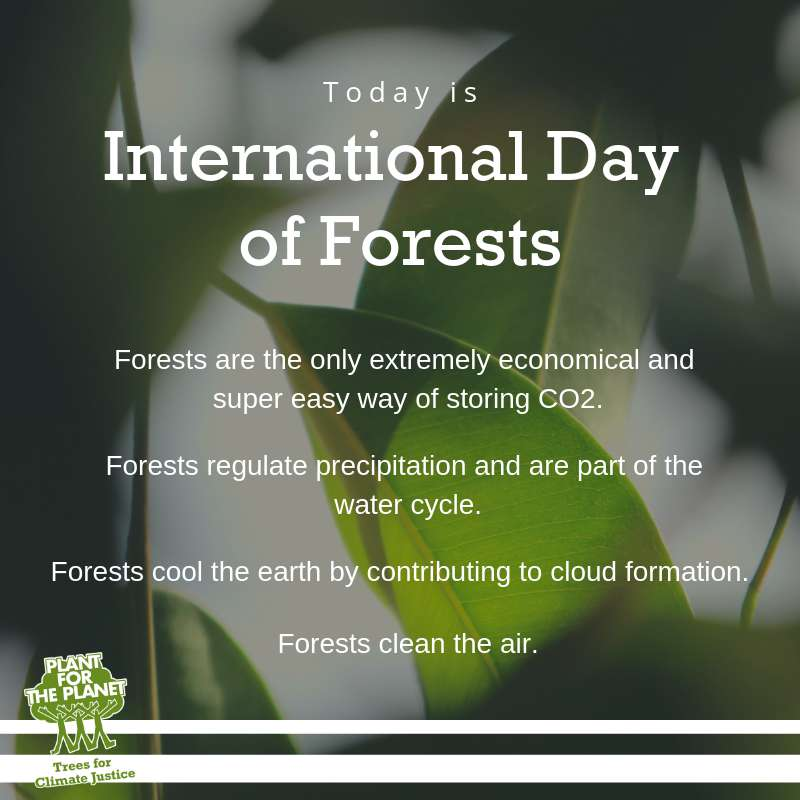 International Day of Forests Wishes for Instagram