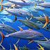 AS Akui, Indonesia Kuasai Pasar Ikan Tuna di Dunia