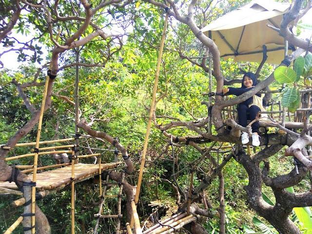 Pesona Kindahan Goa Cocor dan Rumah Pohonnya, Wisata Alam Kebumen yang Sayang Untuk Dilewatkan