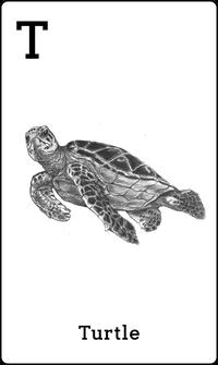 Hewan Kura kura dalam Kartu Animal 4D+