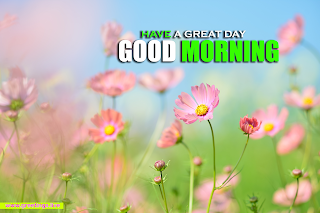 Beautiful morning flowers plant greetings Images