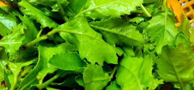Kabar gembira, inilah khasiat daun beluntas