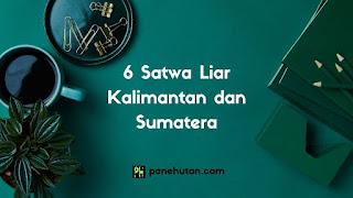 6 Satwa Liar Kalimantan dan Sumatera