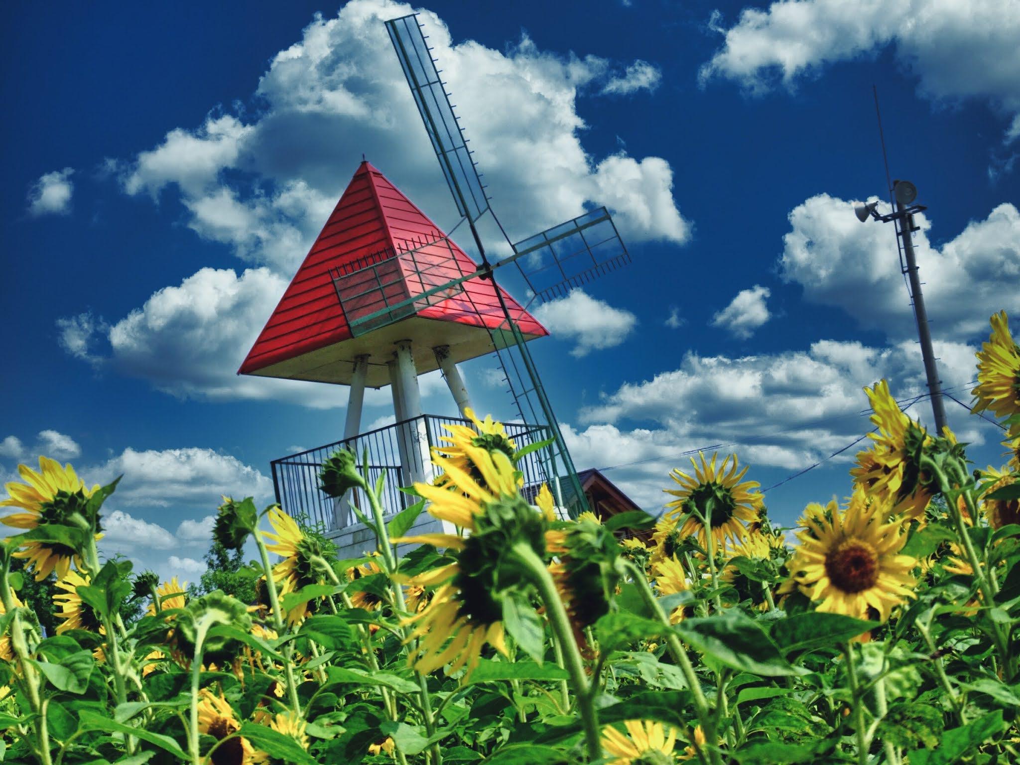 青空 黄色い向日葵(ヒマワリ) ひまわり写真素材 Luminar AI blue sky,yellow sunflower,photo stock,Van Gogh's sunflower