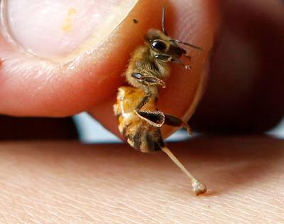 Γιατί μας τσιμπάνε οι μέλισσες