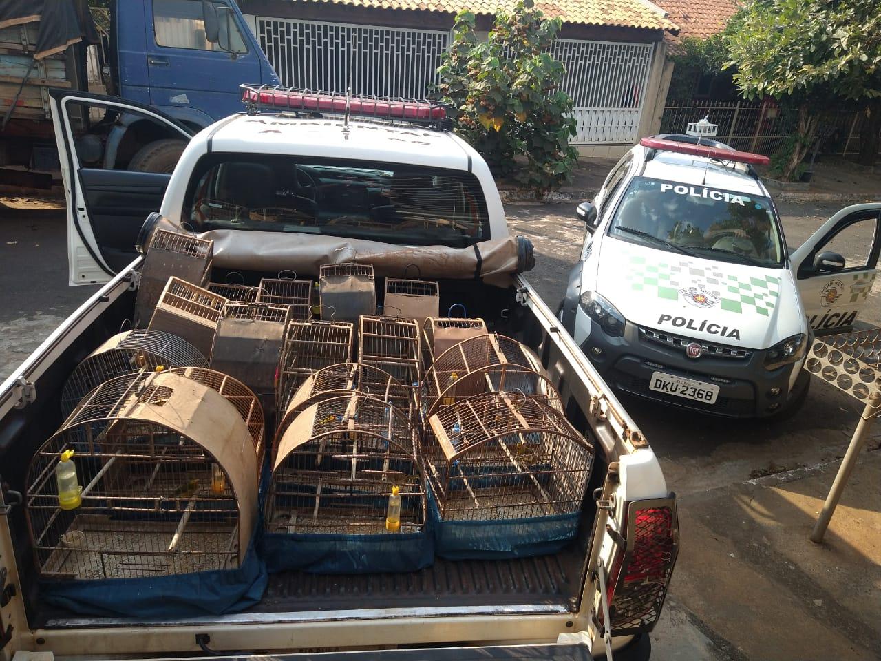 Morador de Severínia é multado em R$ 70 mil por manter 20 aves nativas em cativeiro