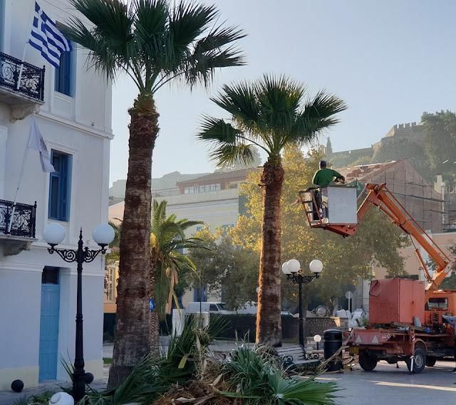Εκτεταμένος καλλωπισμός των φοινίκων στο Ναύπλιο