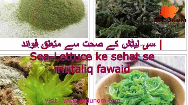 سی لیٹش کے صحت سے متعلق فوائد | Sea-Lettuce ke sehat se mutaliq fawaid