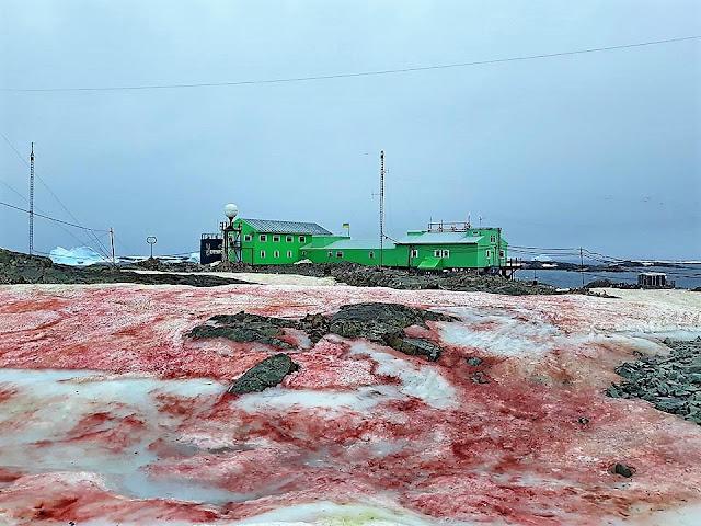 Каква е причинината леда на Антарктида да стане кърваво червен? (СНИМКИ)