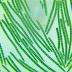 Pesquisa da UFPB indica que alga trata impotência sexual