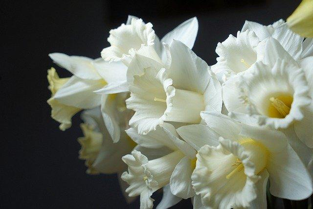 y nghia hoa thuy tien trong phong thuy