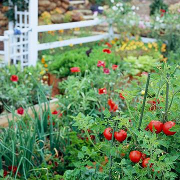 Home Ideazz: Vegetable Gardening