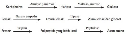 proses pencernaan secara kimiawi