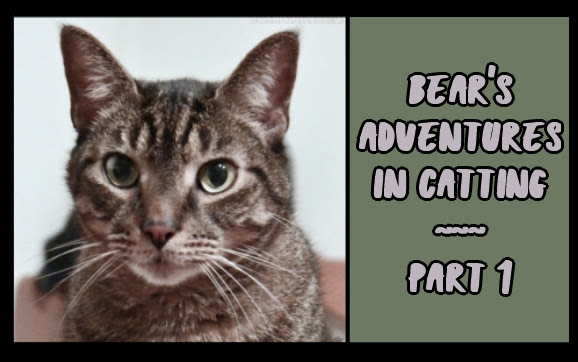 Bear's Adventures in Catting