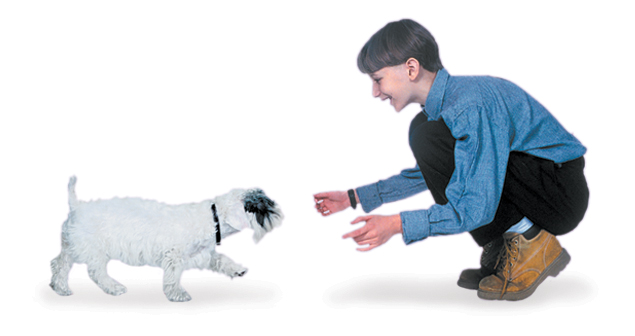 Basic Dog Commands - Training a Puppy