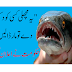 """""""Kill this fish if you see it,"""" the government announced 
