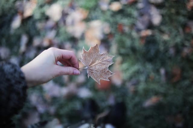 sobre la ecología - Tina Sosna