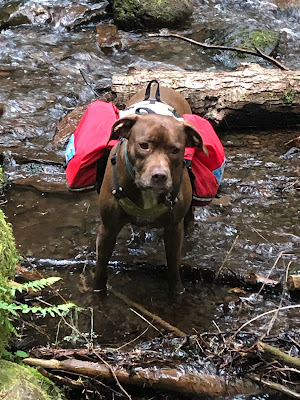 Dog standing in a stream