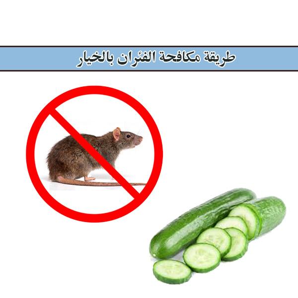 طرق مكافحة الفئران بالخيار