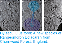 http://sciencythoughts.blogspot.com/2019/01/hylaecullulus-fordi-new-species-of.html