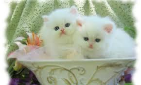 Cute Baby Cat Wallpaper.